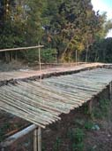 BAMBOO ARE DRYING UNDER SUN